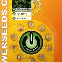 Powerseeds: Automatic London Skunk