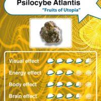 Psilocybe Atlantis