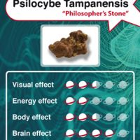Psilocybe Tampanensis