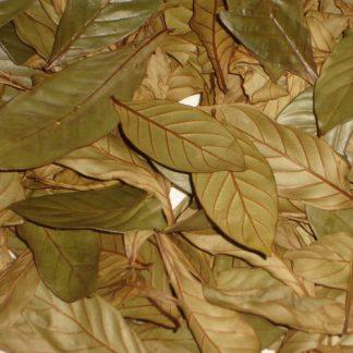 Psychotria Viridis 100 gr.